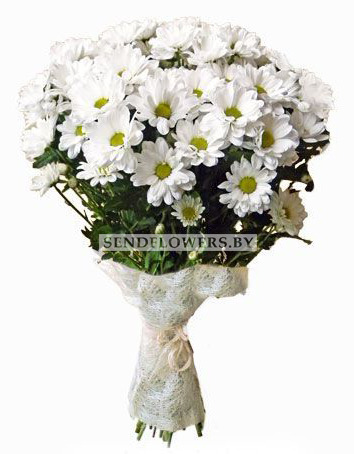 Bouquet Of 7 White Chrysanthemum